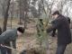 Хуҷанд: Дар Боғи ботаникӣ 200 бех дарахти сўзанбарг шинонида шуд