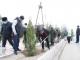 Вдоль дороги Чашмаи Арзана посажено более 500 вечнозеленых саженццев
