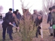 Олимони Белорусия дар хиёбони Истиқлоли шаҳри Хуҷанд ниҳолҳои ҳамешасабз шинониданд